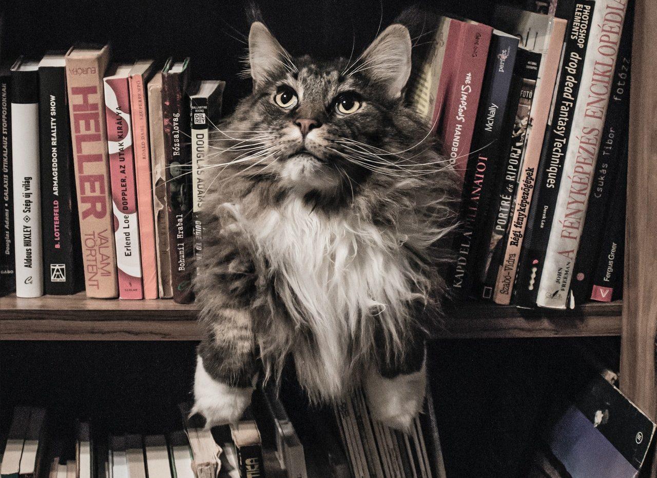 Books & cat